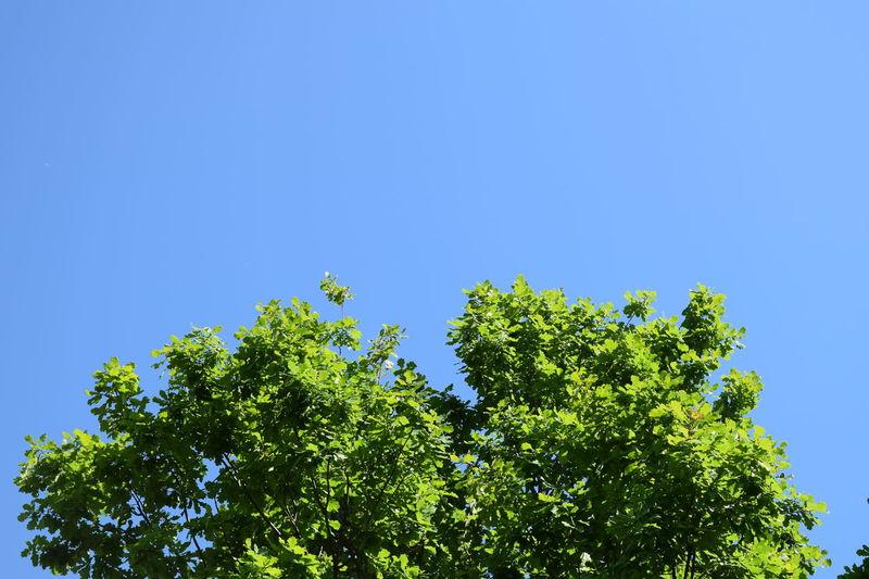 Albero Alberobello Azur Azure Sky Azzurro Azzurrocielo Blue Blue Sky Bluesky Italia Italy Italy Holidays Italy❤️ Nature Nature On Your Doorstep Nature Photography Nature_collection Naturelovers Sky Sky_collection Tree Tree And Sky Tree_collection  Trees Trees And Sky