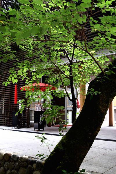 Kumano-Hongu-Taisha Light And Shadow EyeEm Nature Lover EyeEm Best Shots