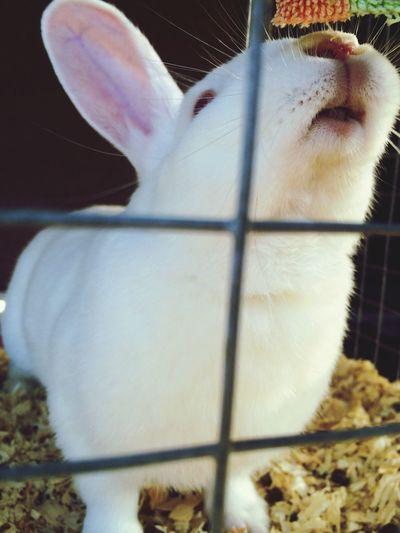 ???????????????? Rabbit Photography