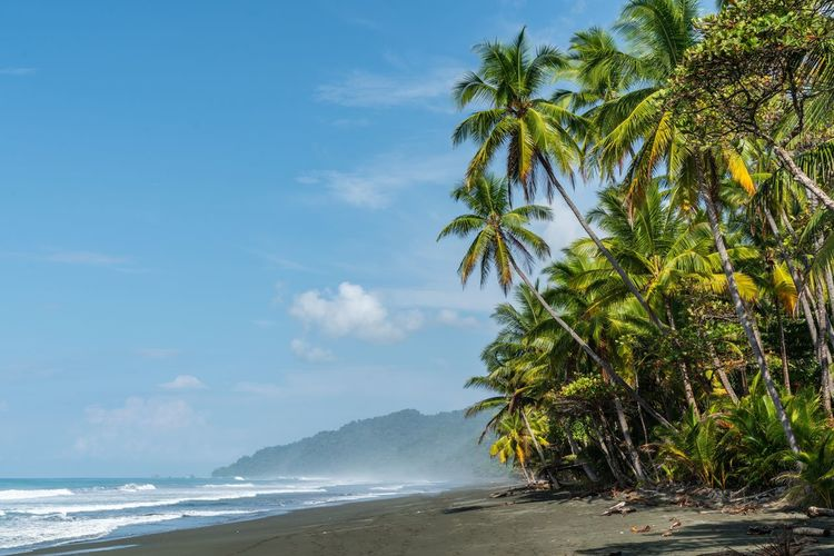 Beautiful beaches of Costa Rica Osa Peninsula Corcovado National Park Corcovado National Park Waves Pacific Ocean Blue Sky Nature Nature Photography Black Beach Palm Trees Tree Water Sky Sea Beauty In Nature Beach Nature Tranquility Idyllic Sunlight Green Color Horizon Over Water No People Outdoors
