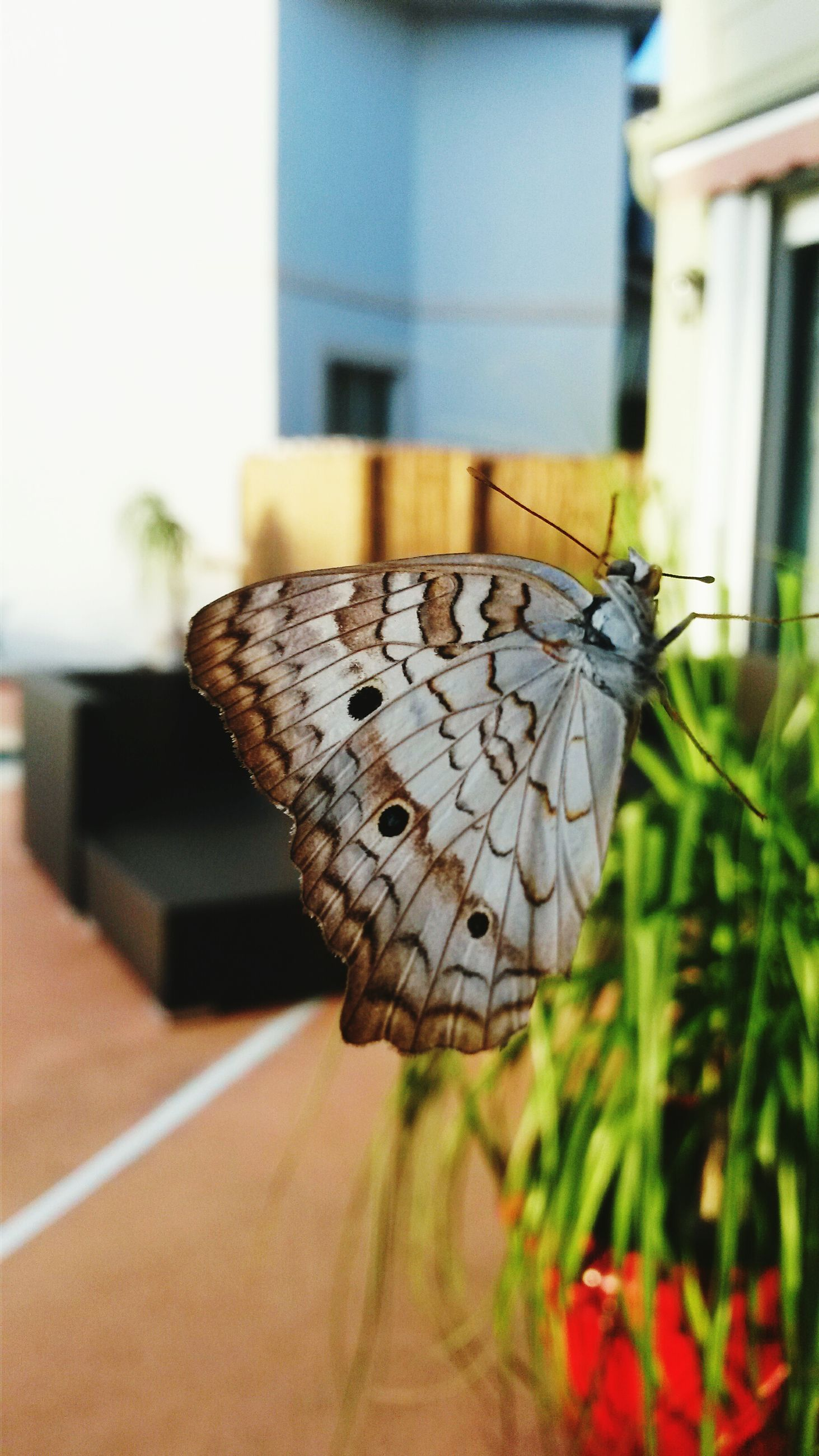 focus on foreground, close-up, built structure, building exterior, selective focus, one animal, architecture, butterfly - insect, insect, animal themes, day, outdoors, wildlife, animals in the wild, butterfly, leaf, animal representation, no people, plant, nature
