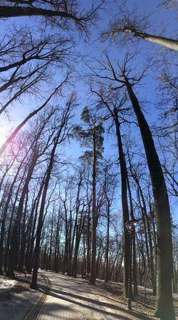 Trees Springtime Walking Around Captured Moment