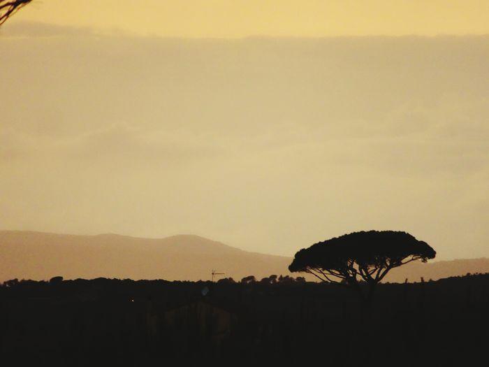 Pine Tree Silhouette Evening Evening Sky Evening Light Mountain Silhouette Sky