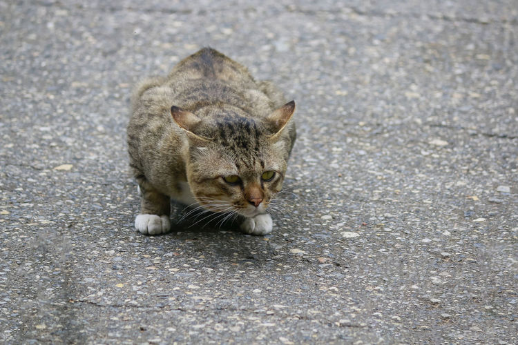 High angle view of a cat on the road