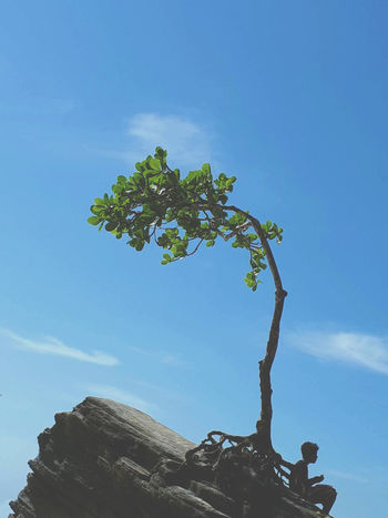 Beauty In Nature Blue Clear Sky Day Growth Leaf Low Angle View Nature Plant Plant Part Sky Tranquility Tree
