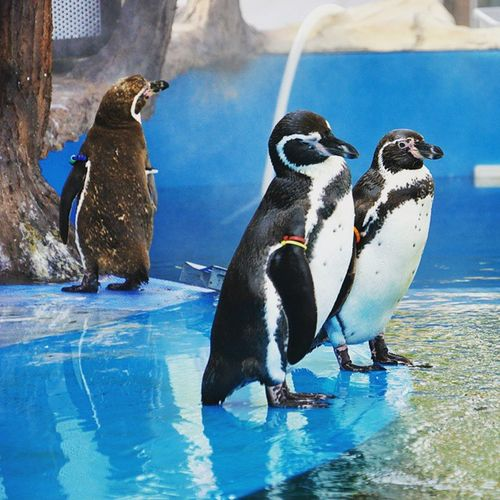 Discovery Park. пингвины турция дискавери зоопарк птица пингвин Turkey Zoo F4F Animals Bird Nature Discovery Water Antarctica Penguin