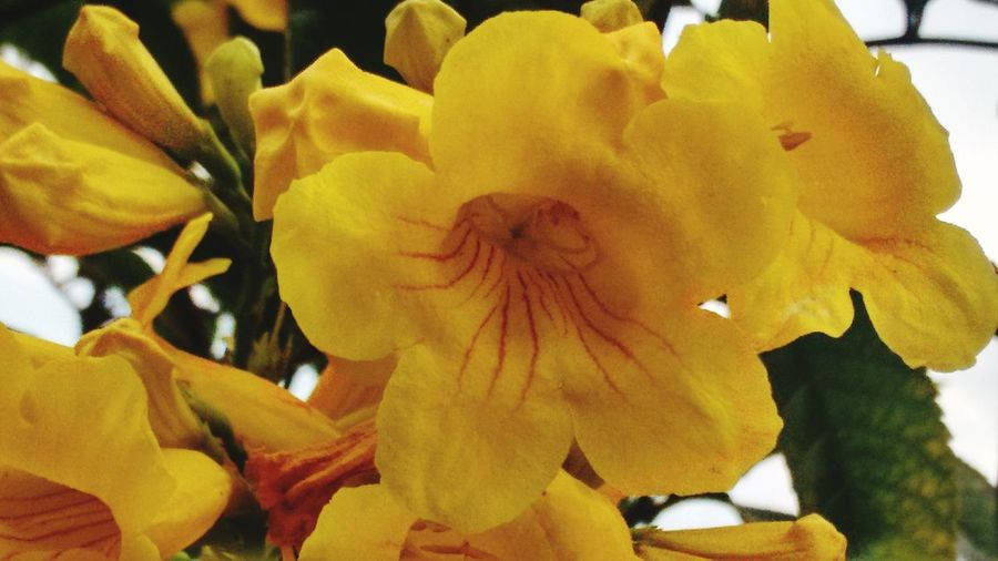 Flores Flores Y Más Flores Floresconmagia Flores, Bosques Y Naturaleza. Flores Y Texturas Parque El Tunal Flores Amarillas  Florespromundo