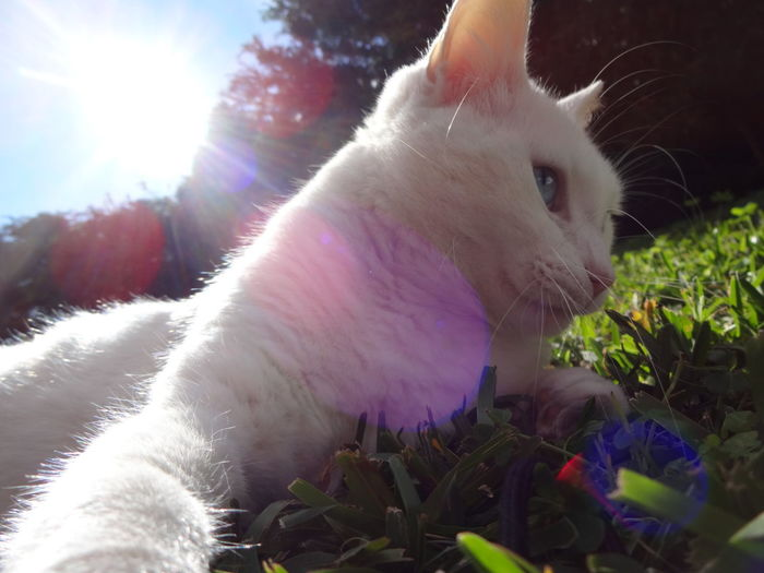Nature Picture Life Like Following Instagram L4l Cat Pets Cute Cute Pets Love Hotday Wintertime Holydaysend Normality  Follow Miao Meow Animals Cat♡