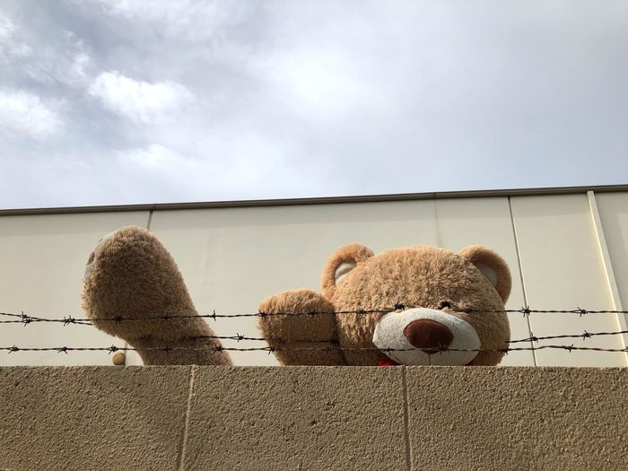 Low angle view of teddy bear on barbed wire on building against sky