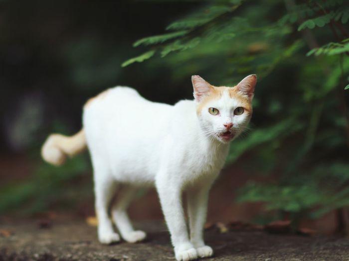 Meow~ Manila