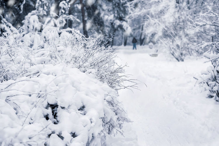 Picturesque bright winter landscape of a forest with different trees covered with snow. Natural background Snow Winter Cold Temperature White Color Nature Plant Beauty In Nature Day Land Tree No People Tranquil Scene Frozen Non-urban Scene Snowing Tranquility Growth Covering Forest Landscape Christmas Cowered Outdoors Frost Nature