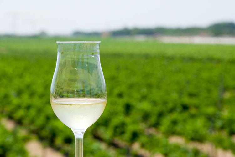Close-Up Of Wineglass At Vineyard
