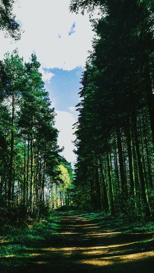 Naturesartwork AWalkInTheWoods Sunlight Through Trees Spring2016 Woodland Walk Pathway In The Forest