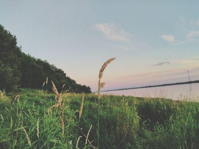 Grass Water Sky