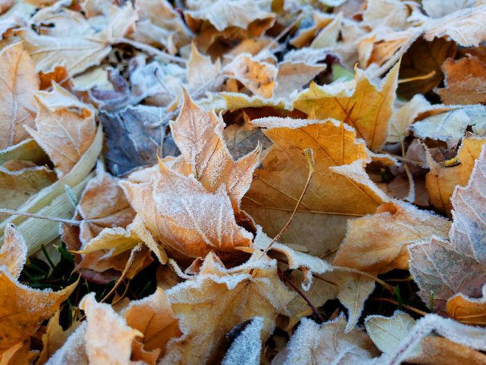 Full frame shot of dried autumn leaves on land