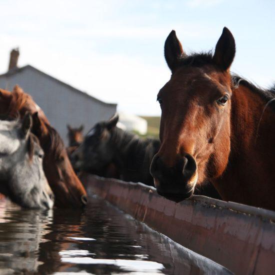Horses Travel Wildlife & Nature Silkroad