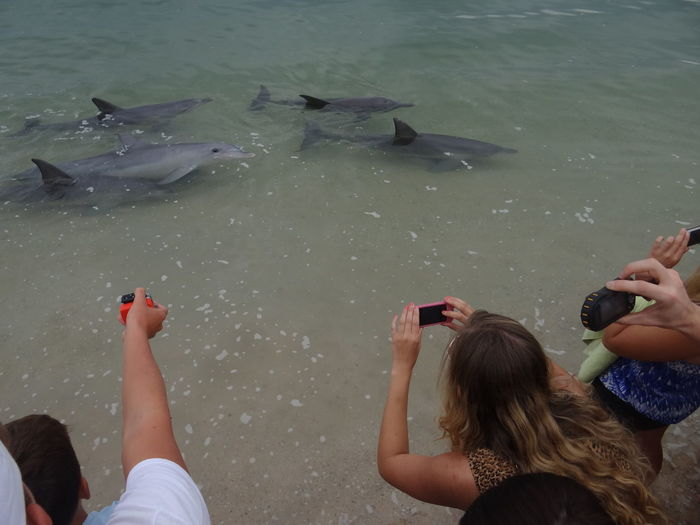 People photographing fishes in sea