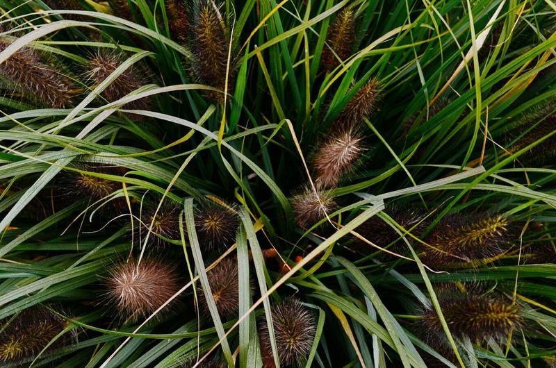 Beauty Plant Love Plants Colors Minimalism