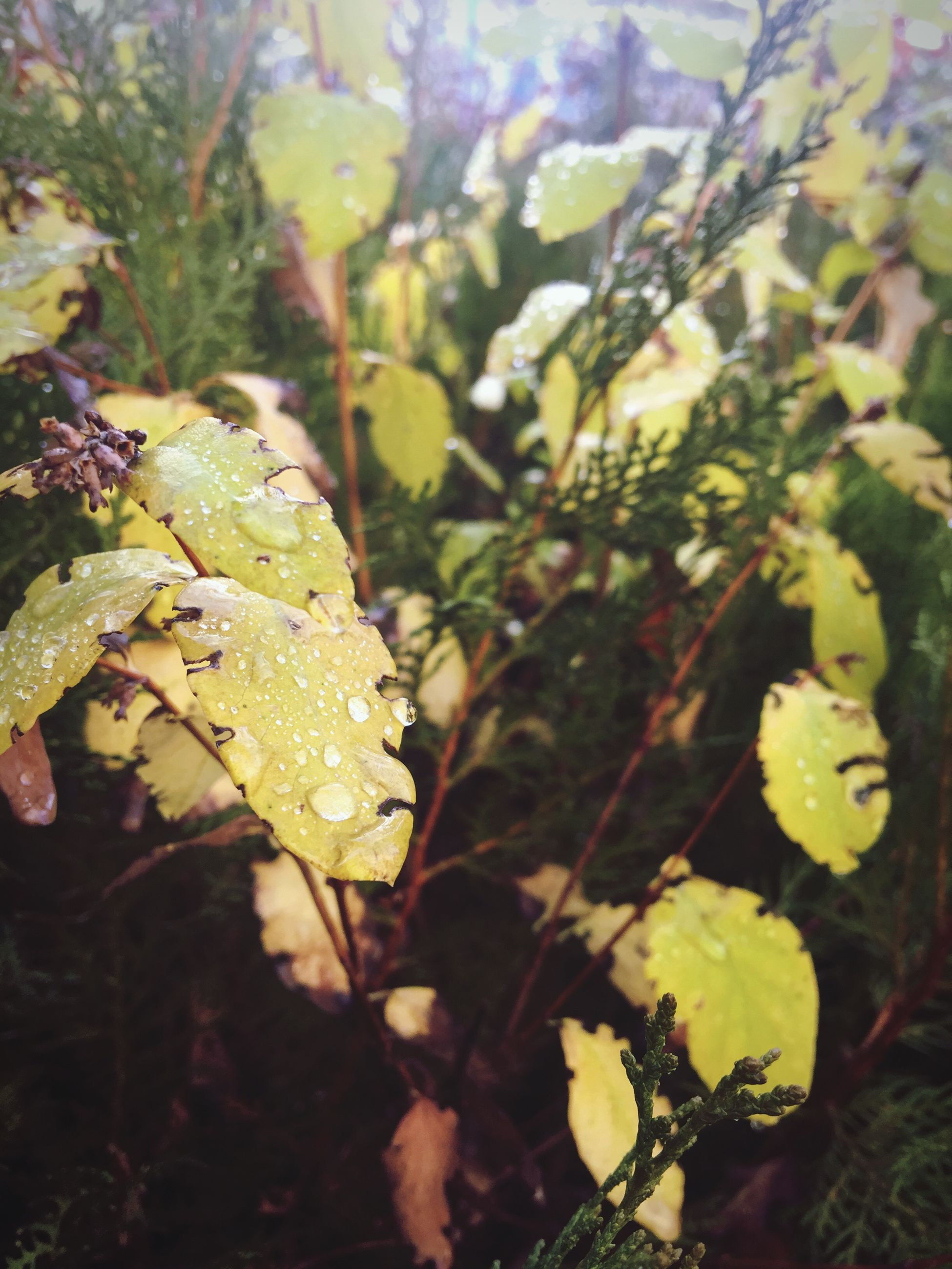leaf, growth, close-up, nature, plant, focus on foreground, beauty in nature, freshness, fragility, season, drop, water, wet, tranquility, day, selective focus, yellow, outdoors, no people, leaves