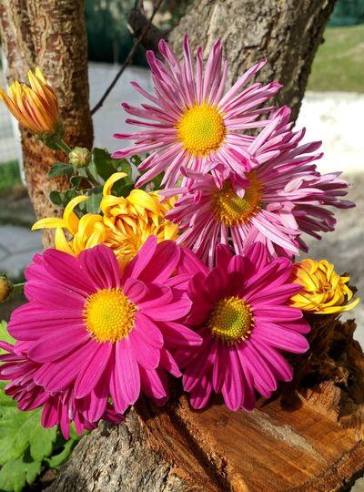 Close-up of fresh pink flower bouquet