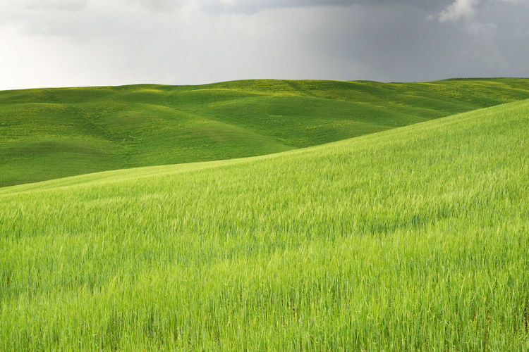 Agriculture Hills Tuskany Agriculture Beauty In Nature Cloud - Sky Cloudy Stormy Cypress Trees  Day Environment Field Grass Green - Golf Course Green Color Growth Idyllic Land Landscape Nature No People Outdoors Plant Rolling Landscape Rural Scene Scenics - Nature Sky Tranquil Scene Tranquility
