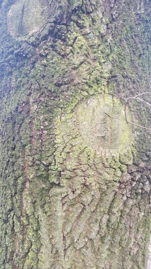 Corteza de arbol Backgrounds Full Frame Pattern Growth Close-up No People Nature Outdoors Crushed Day