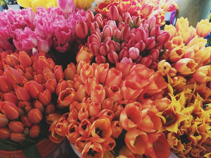 Flower Fragility Freshness Beauty In Nature Nature Flower Head Orange Color Petal No People Plant Full Frame Blooming Close-up Outdoors Backgrounds Water Flower Market Day