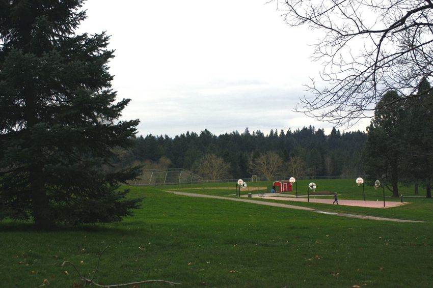 Raleigh Hills Oregon Canon Rebel Xsi Trees