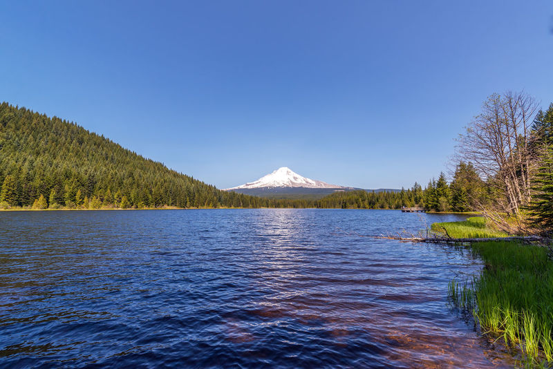 Wide angle view of Mt. Hood and Trillium Lake in Oregon Cascade Cascade Mountains Forest Hood Lake Landscape Mount Hood Mountain Mountain Range Mt Hood Nature Oregon Pacific Northwest  Snow Tree Trees Trillium Trillium Lake Volcano Water Wilderness