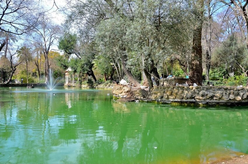 Tree Water Nature Lake Beauty In Nature Sevilla Seville Parque De Maria Luisa Tranquility Outdoors Green Color Beauty In Nature Plant Flower
