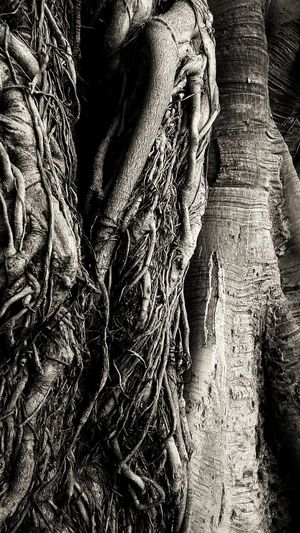 Ficus benjamin Close-up Textured  Nature Day Intricacy Tranquility No People Sicily