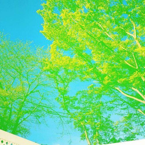 おハローございます 今朝の娘ちゃんとママさん何やら会話 ゴールデンウィーク のどっかでさ〜 鎌倉にいるママの友達んとこ行こ〜😉 やったー!!あの雪のおうちのやつ好き〜!😍 娘ちゃん ……😂 頑張れ!😁😁😁 人生はながいからね!まだまだこれから!👍 緑が生い茂っていい感じ Cherryblossom の隣のかしの木 葉っぱがカワイイ
