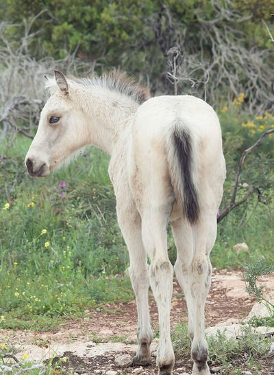half-wild creamello foal Animal Themes Creamello Day Domestic Animals Foal Freedom Horse Liberty Livestock Mammal Nature No People One Animal Outdoors Standing Wildlife Young Animal