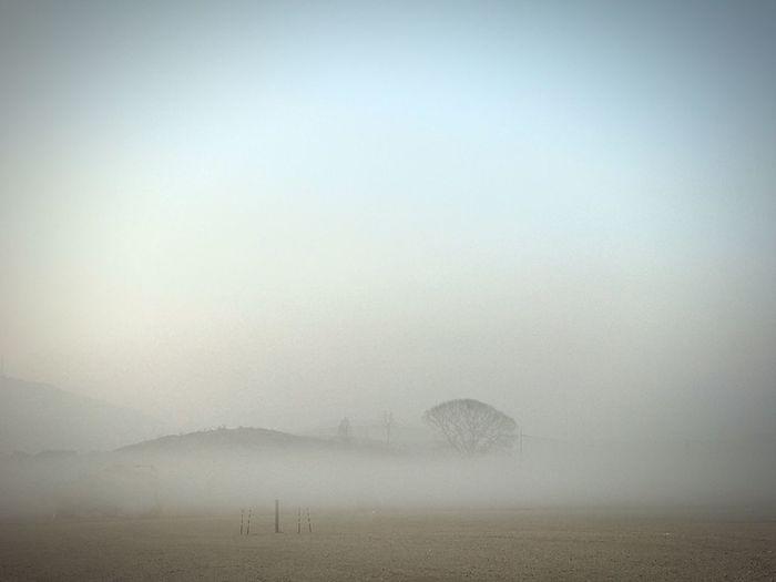 당하리에서 광명마을을 넘기 전 매밭 풍경. 저 자리에서 300년을 지켜온 나무는 없어지지 않을 것 같다. Nature Beauty In Nature Mountain Landscape Iphonephotography IPhoneography Leechangwon Tree Fog Smog 나도 하게된 흔한 풍경사진.