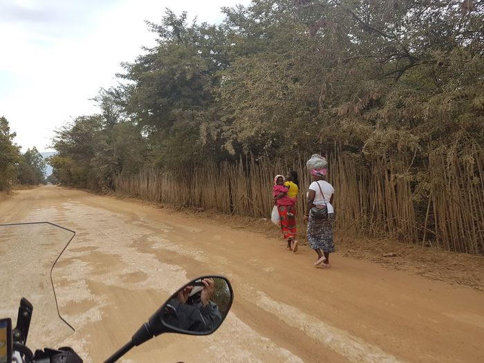 Rear view of people walking on road against trees