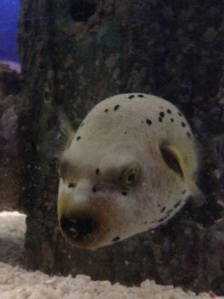 Aquaria Klcc Aquarium Dog Fish Fish Malaysia Sea Life Underwater