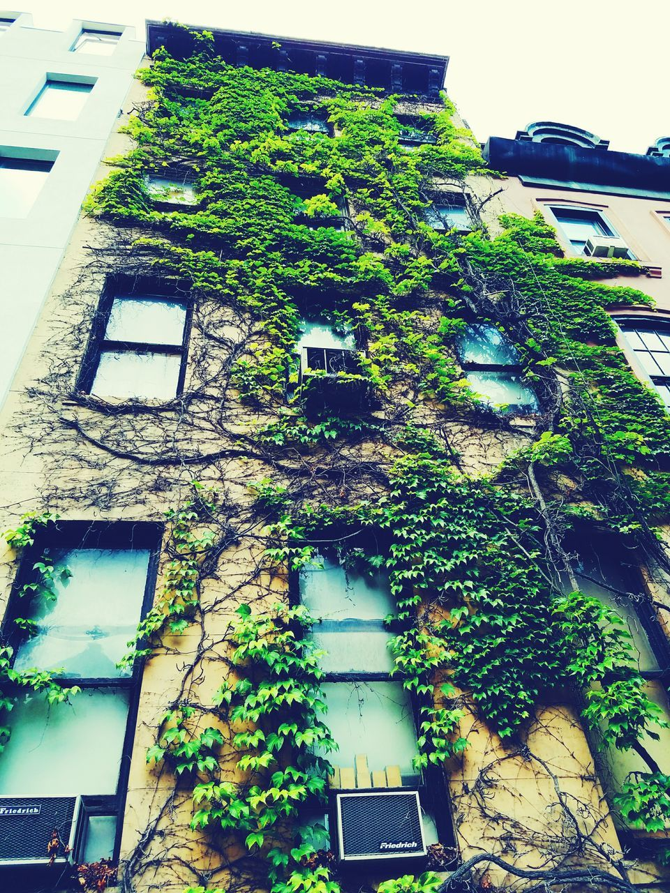 architecture, building exterior, ivy, built structure, creeper, tree, low angle view, day, no people, outdoors, creeper plant, plant, window, growth, green color, nature, close-up, sky