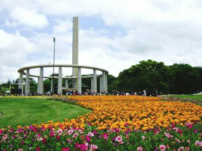 Sacred Ground Park. Sao Paulo. Brazil Flower Freshness Growth Field Fragility Rural Scene Beauty In Nature Agriculture Cloud - Sky Petal Travel Destinations In Bloom Tower Crop  Park - Man Made Space Culture Sky Blossom Flowerbed Nature