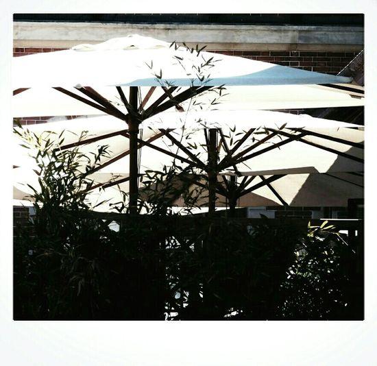 Parasol Blanc Beige Vert Green Palm Tree Palmier  Nature Coup De Fraîcheur Tranquilité Parc De Bagatelle Paris