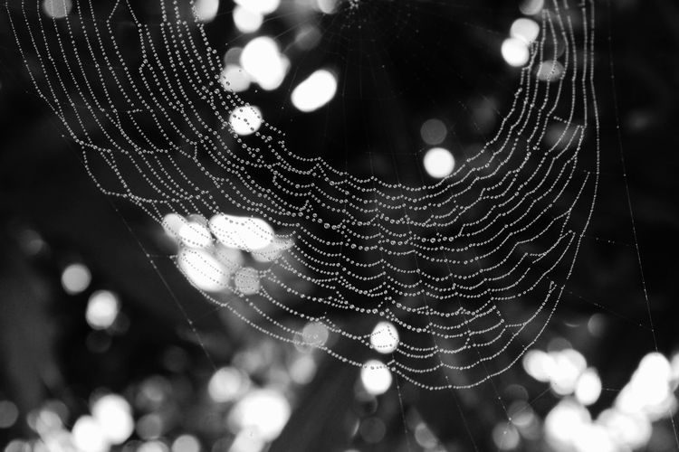 Trapped Web