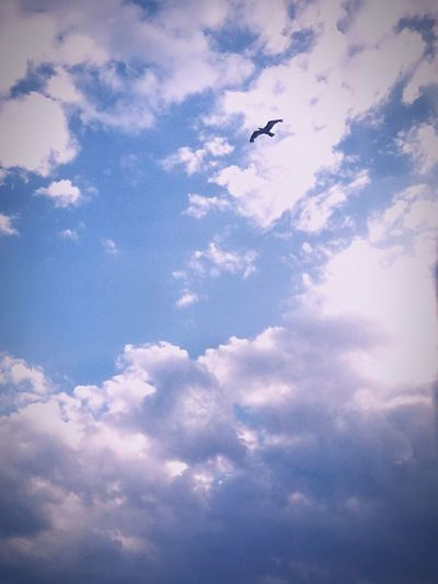 Cloud - Sky Sky Flying Animal Animal Themes Nature Vertebrate Low Angle View No People Airplane Air Vehicle Beauty In Nature Outdoors Mode Of Transportation Bird Blue Scenics - Nature Day Transportation Animal Wildlife Autumn Mood EyeEmNewHere 50 Ways Of Seeing: Gratitude