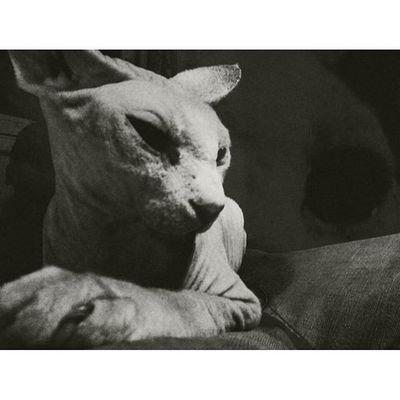 Lo de mi cara no es una sonrisa. Cat Black Dark