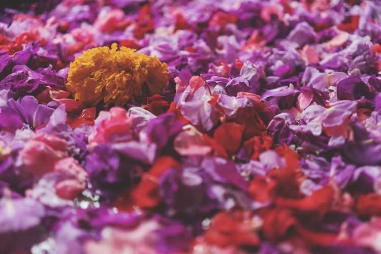 Bed of flowers floating on water Full Frame Backgrounds Flower Flowering Plant No People Close-up Freshness Plant Selective Focus Beauty In Nature Nature Abundance Pink Color Purple Petal Fragility