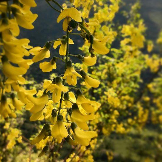 Flowers Flower Flowerporn Flowerpower Yellow Flower Yellow Mountain