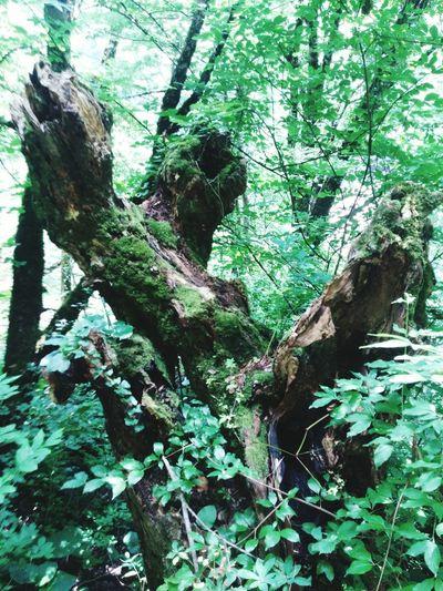 Erfelek Erfelektatlıcaşelaleri Tırmanış Lifeisbeautiful Lifeislife Nature TreePorn Green Green Green!