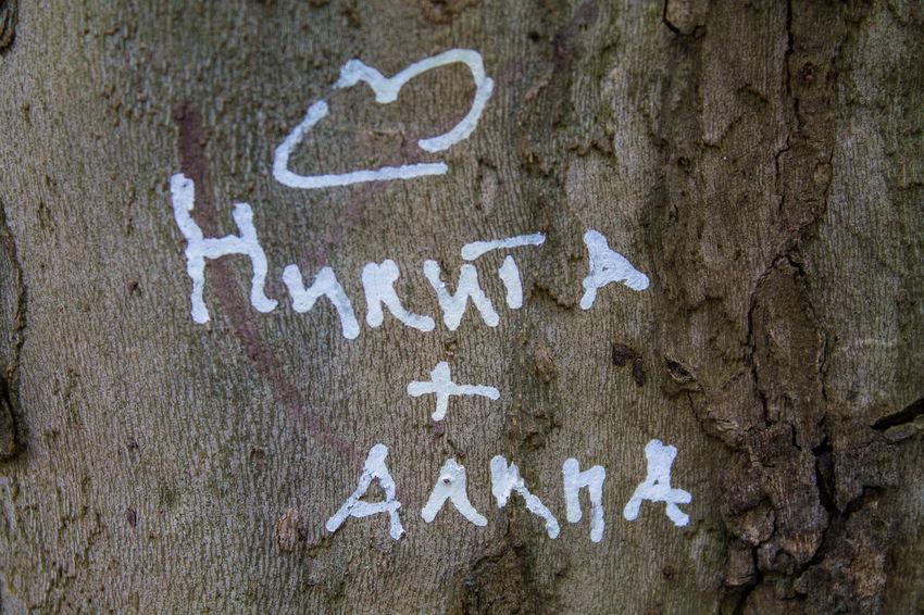 Bark Tree Close-up