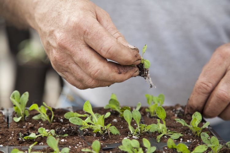 Close-Up Of Hand Planting Seedlings