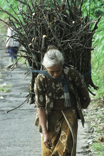 Woman carrying logs on footpath