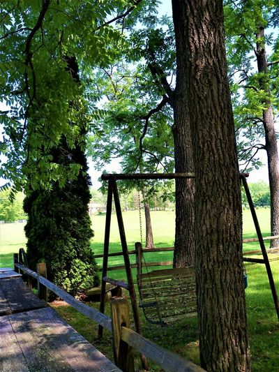 Country Life Country Country Living Creek Farmland Field Indiana Leaves🌿 Nature Nature Photography Tree Trees USA Country Life Countrylife Countryside Countryside Landscape Countryside Life Hoosier Hoosierstate Leaves Leaves_collection Nature_collection Outhouse Picnic Table Swing