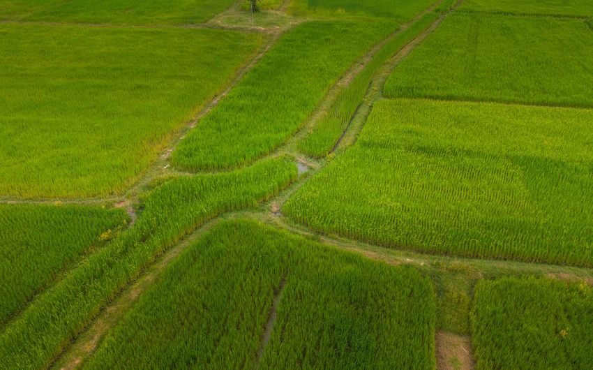 Scenic view of agricultural field